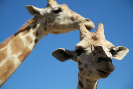 App of the Week: San Diego Zoo Safari Park launches app!